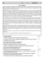 Lernplakat - Textarbeit