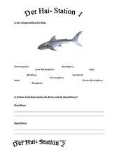 Der Hai- 3 Stationen