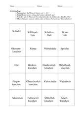 Lernspiel:20 Zuordnungskarten menschliches Skelett Jgst. 5