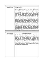Wespen - Kartei