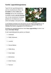 Kennblatt zur Familie der Lippenblütengewächse