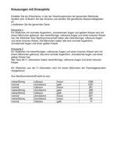Genkartierung des X-Chromosoms bei Drosphila melanogaster