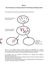 Mitose und Meiose im Vergleich