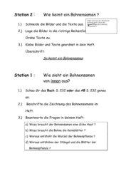 Bohnenkeimung - 4 Stationen und Unterrichtsskizze