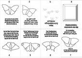 Schmetterlingsminibuch