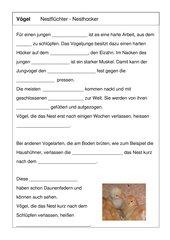 Nestflüchter-Nesthocker