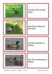 Lesekarten - Enten (ohne Umlaute)