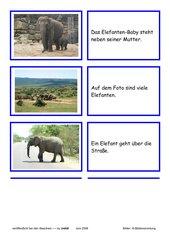 Lesekarten - Elefanten (Zuordnung Bild - Satz)