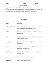 Steckbrief Rötelmaus