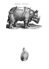 Das Rhinozeros von Dürer: Weitergestaltung eines Bildfragments