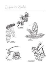 Zweige und Zapfen