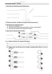 Arbeitsblatt Chromosom und DNA