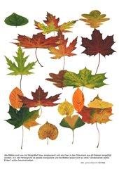Blätter-Sammlung – Herbstlaub