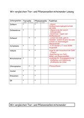 Vergleich von Tier- und Pflanzenzelle