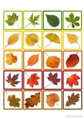 Memo-Spiel / Zuordnungsspiel  :     Herbst / Herbstlaub