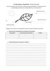 Zusammenfassung Fotosynthese