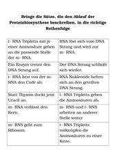 Proteinbiosynthese, Translation, Transskription