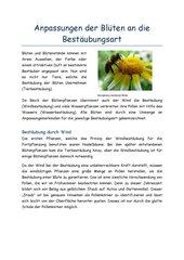 Bestäubungsarten und Anpassung der Blüte