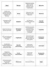 Fachbegriffe-Domino Trophiestufen Ökologie