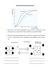 Funktionsweise des Hämoglobins