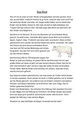 Das Rind   Sachtext mit Arbeitsblatt