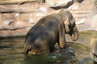 Elefantenbad # 5 - Elefant, Dickhäuter, Säugetier, Rüssel, Pflanzenfresser, grau, baden, Bad, Wasser