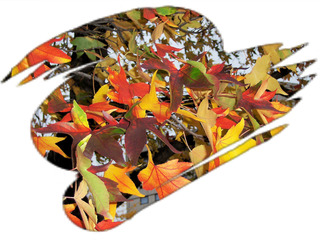 Herbstlaub, Effektbild - Herbstlaub, Laub, Blätter, Herbst, bunt, Effektbild, Gruß, Grußkarte