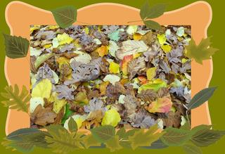 Blätter im Herbst, Effektbild - Blätter, Laub, bunt, Herbst, Effektbild, Gruß, Grußkarte