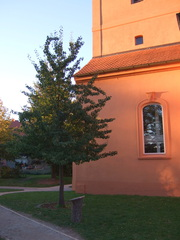 Birnbaum des Herrn von Ribbeck - Gedicht, Herr von Ribbeck auf Ribbeck, Grab, Birnbaum, Havelland, Ballade, Theodor Fontane