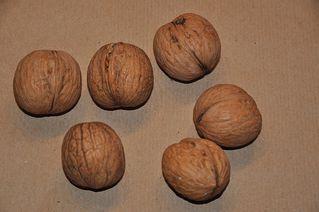 Walnüsse  - Walnuss, Nuss, Kern, knacken, Anlaut N, Weihnachten, Ordnungszahl 6, Fettsäure, Omega-3, sechs