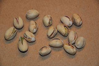 Pistazien - Pistazie, Steinfrucht, Stein, Kern, zweihausig, Sumachgewächs, sechzehn