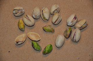 Pistazien - Pistazie, Steinfrucht, Stein, Kern, zweihausig, Sumachgewächs