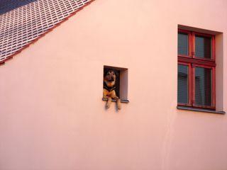 Der Hund - Hund, Haus, Hundehaltung, Ausschau, Tier, Wachhund, wachen, schauen, Schäferhund, Erzählanlass, Schreibanlass
