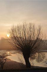 Nebelweide - Nebel, Nebelschwaden, neblig, Landschaft, Weide, Kopfweide, Baum, Gegenlicht, Sonne, Sonnenaufgang, See, Morgen, morgens, Stimmung, Erzählanlass, Kalenderbild