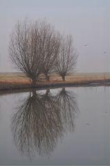Weiden am Morgen - Nebel, Nebelschwaden, neblig, Landschaft, Weide, Kopfweide, Baum, Bäume, See, Morgen, morgens, Stimmung, Erzählanlass, Schreibanlass, Kalenderbild, Spiegelung, Symmetrie