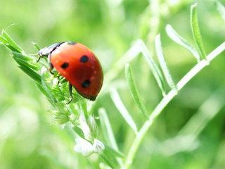 Marienkäfer - Käfer, Insekten, Marienkäfer, Insekt, rot, Nützling, Schreibanlass