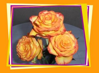 Rosen - Rose, Effektbild, Blume, Blüte