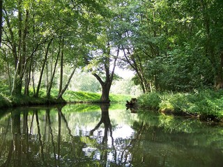 Spreewald 3 - Spree, Spreewald, Baum, Bäume, Birke, Birken, Baumstamm, Flussbiegung, Ufer, Auenlandschaft, Flussaue, Ruhe, Stille, Meditation, Spiegelung, Fluss, Fließ, Fließe