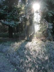 Sonnenstrahlen im Wald - Sonne, Sonnenstrahlen, Strahlen, Licht, Winter, Meditation, Wald, Raureif