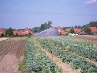 Bewässerung - Bewässerung, Landwirtschaft, Feld, Regen, Trockenheit, nass, trocken, Trockenheit, künstliche Bewässerung, Kulturland, Nutzpflanzenproduktion