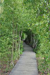 Wege # 2 - Weg, Steg, Holz, Holzweg, Moor, Perspektive, Erzählanlass, abbiegen, Kurve, Meditation