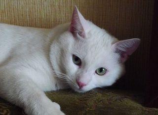 Katze 02 - Kater, Katze, Haustier, Säugetier, Faulenzen, Entspannen, Schreibanlass