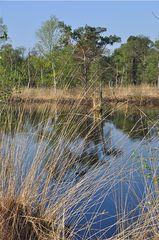 Pietzmoor # 4 - Moor, Pietzmoor, Schneverdingen, Lüneburger Heide, Landschaft, Landschaftsform, Hochmoor, Feuchtgebiet, Wasser, Sumpf, Naturschutzgebiet, renaturiert, feucht, nass, Spiegelung