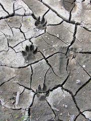Innerstetalsperre #2 - Innerstetalsperre, Talsperre, Wasser, Stausee, Boden, Hund, Hundepfoten, Pfoten, Spuren, Spur, Abdruck, trocken