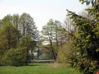 Blick in den Frühling - Frühling, grün, Bäume, April