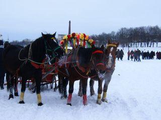 Troika - Pskow, Russland, Masleniza, Troika, Pferd, Kutsche, Winter, Märchen, Landeskunde