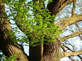 Windspiel mit Blättern - Wind, Blätter, Windspiel, Blickpunkt, Bildimpuls, Impression, Ethik