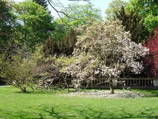 Frühlingsimpression - Frühling, Jahreszeit, Bäume, blühen, Impressionen
