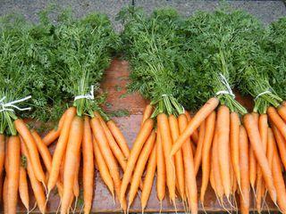Karotten - Karotte, Karotten, Möhre, Möhren, Mohrrübe, Gelbe Rübe, Ruebli, Gemüse