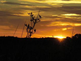 Sonnenuntergang am Achterwasser#2 - Sonnenuntergang, Abend, Sonne, Usedom